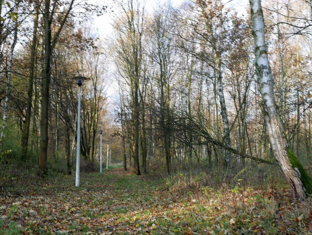 メシアン 世の終わりのための四重奏曲 ゲルリッツの捕虜収容所 時の終わりへ メシアンカルテットの物語 収容所跡地の散策路には街灯がある、 訪れる人も少なく道は落ち葉で埋もれている@Stalag VIII-A 跡地