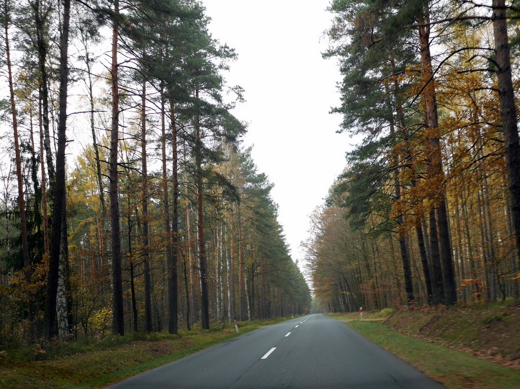 下シレジア地方 ポーランド   クリチュクフ城 森を抜けてクリチュクフ城に向かう @Zamek Kliczków