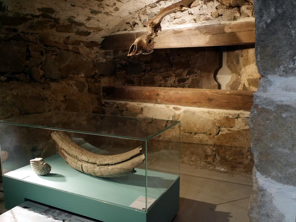 ゲルリッツ 博物館 ゲルリッツ歴史博物館 ドイツ中世都市 発展史 石器時代の展示 @Kulturhistorisches Museum Görlitz