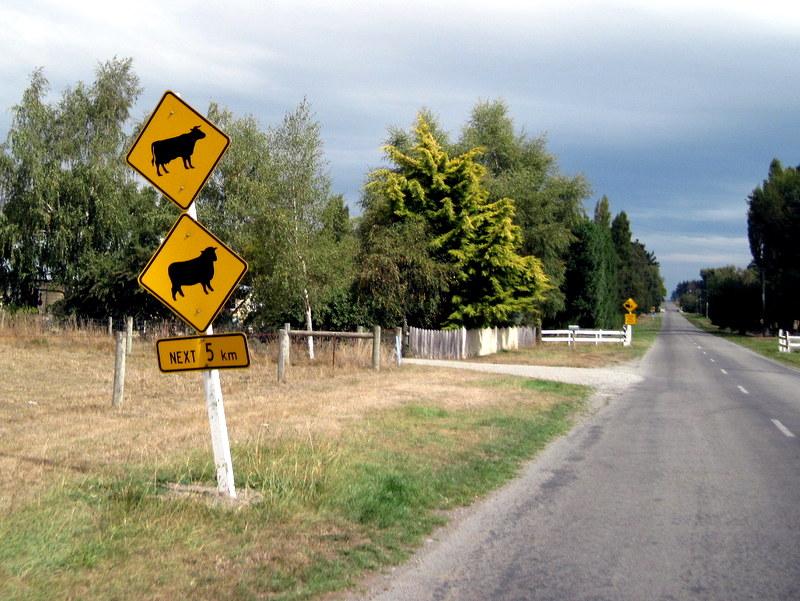 海外ツーリング ニュージーランド ロード オブ ザ リング オートバイレンタル クライストチャーチ 空港 テカポ湖 ニュージーランドならでは、牛と羊縦並びの注意看板
