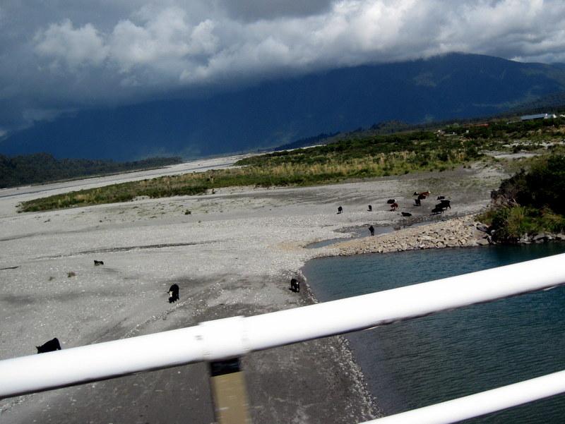 海外ツーリング ニュージーランド ロード オブ ザ リング オートバイレンタル 南島 西海岸 広い河原で放牧中 @Haast