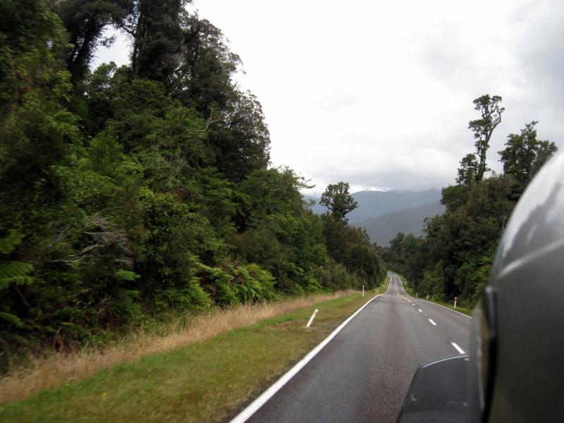 海外ツーリング ニュージーランド ロード オブ ザ リング オートバイレンタル 南島 西海岸 森からシダ類の葉が覗く @West Coast
