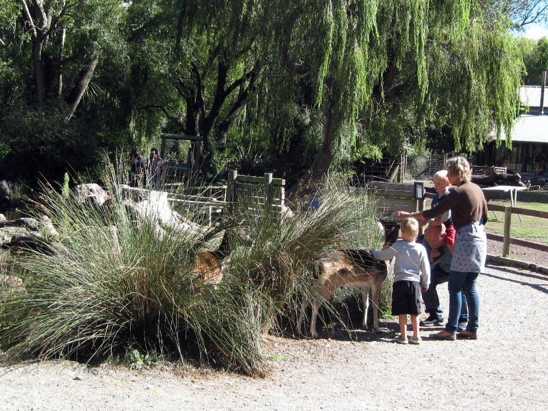 海外ツーリング ニュージーランド ロード オブ ザ リング オートバイレンタル クライストチャーチ ウィローバンク動物園 観客と戯れる動物たち @Willowbank Wildlife Reserve
