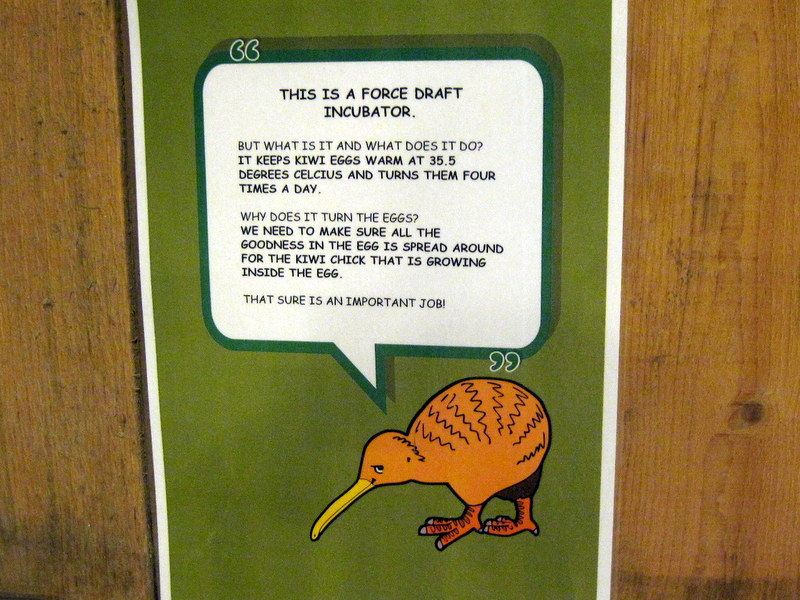 海外ツーリング ニュージーランド ロード オブ ザ リング オートバイレンタル クライストチャーチ ウィローバンク動物園 キーウィの卵解説 @Willowbank Wildlife Reserve