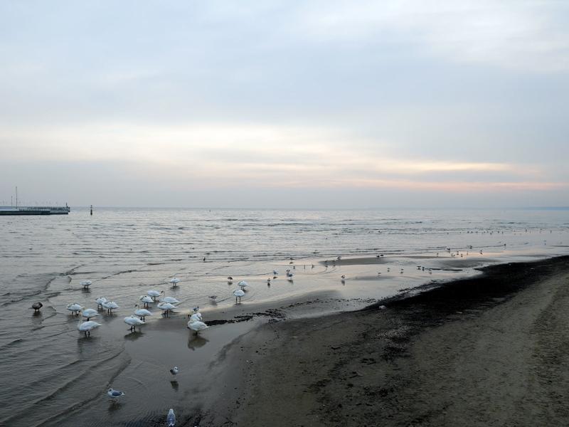 グダニスク グダンスク ダンツィヒ ポーランド ソポト 木製桟橋 早朝の砂浜 @Sopot