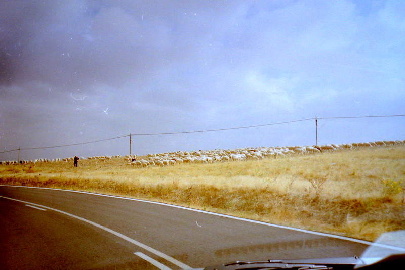 スペイン映画 ミツバチのささやき エル スール ビクトル エリセ  タクシーの道中 @Hoyuelos, Segovia