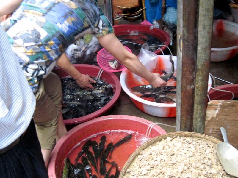 魚も手づかみで吟味 @石灰市菜市場 重慶