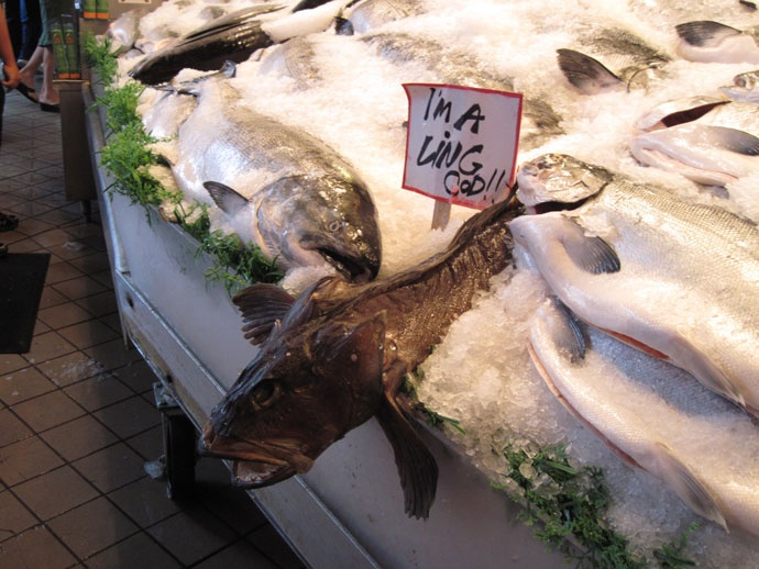 I'm a living cod !! 生きている鱈 @Pike Place Fish Market