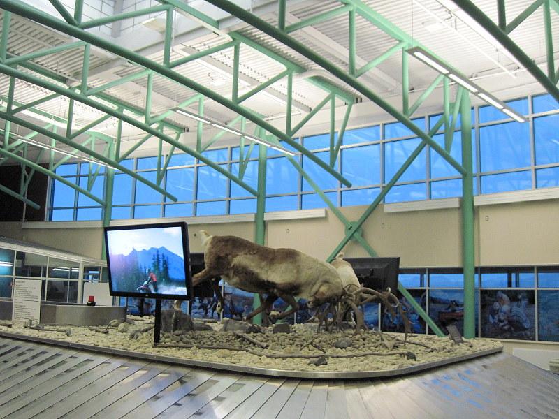 空港の手荷物受取り所でも動物が歓迎 @Erik Nielsen Whitehorse International Airport